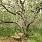 Обчищення або обрізка плодових дерев