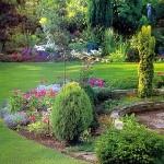 Хвойні рослини садимо в саду