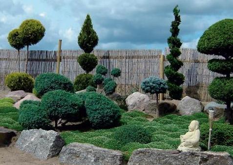 Дизайн з вічнозелених рослин.