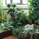 Прикрашаємо кімнату рослинами