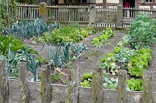 Грунт для овочевих рослин