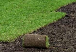 Рулонний газон.