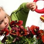 Рослини для дитячої кімнати