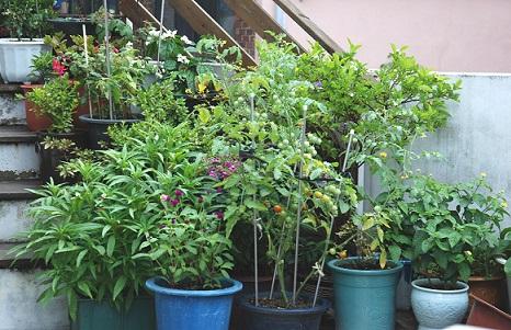 Як доглядати за кімнатними рослинами?