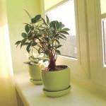 Інтер'єр із рослин у кімнаті.
