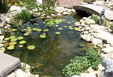 Рослини для водойм на ділянці і прибережжя