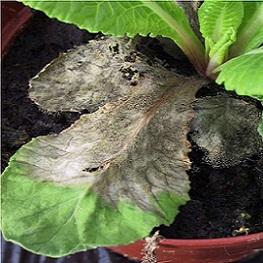Інфекційні захворювання рослин.