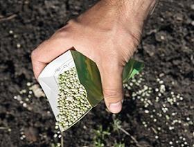 При правильному догляді ця тропічна рослина обов'язково порадує
