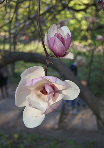 Національний ботанічний сад в м. Києві