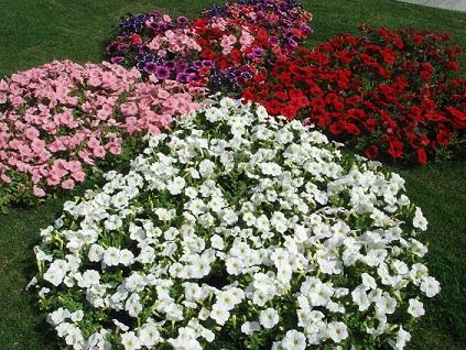 Дизайн ділянки з квітів