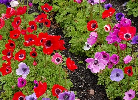 Дизайн ділянки з квітів, на гарному фото
