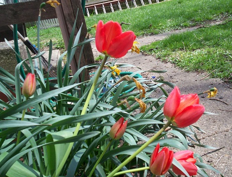 Прикрашаємо квітами садові доріжки
