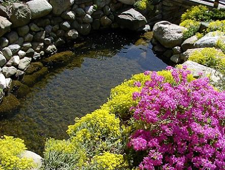 Квітковий дизайн водойми, фото