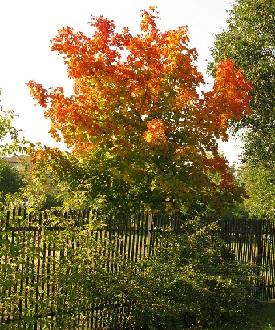 Осінь - краща пора для посадки саджанців фруктових дерев