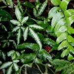 Тіньовитривалі кімнатні рослини