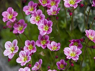 Легенди про кімнатні квіти