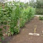 Зрошення земель виноградників в Україні