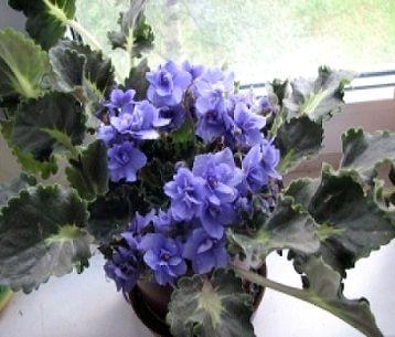 Прикрашаємо кімнату квітами з холодних кольорів