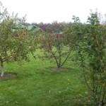 Розміщення плодово-ягідних дерев у саду