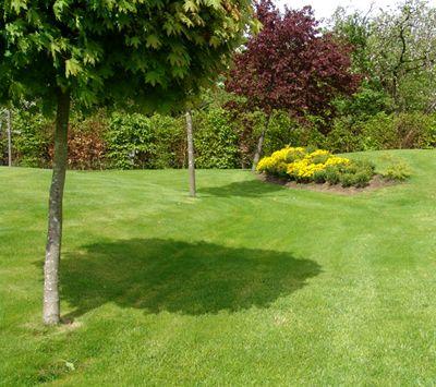 Яку газонну траву краще вибрати?