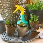 Догляд за кімнатними рослинами в осінній період
