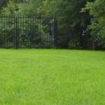 Який газон краще вибрати і посіяти