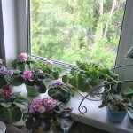 Розміщення квітів у маленькій кімнаті