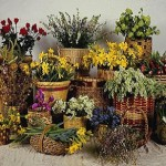 Кімнатні квіти, розташування і догляд.