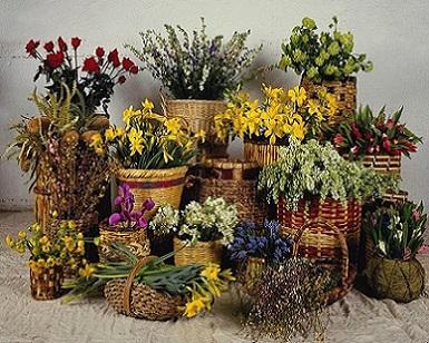 Кімнатні квіти розташування і догляд