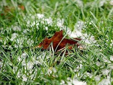Готуємо газон до зими правильно