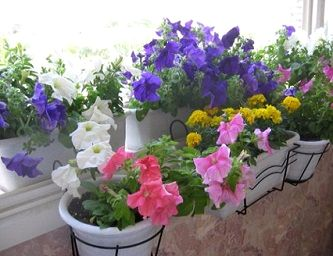 Догляд кімнатних квітів взимку