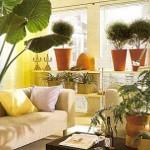 Якщо алергія на кімнатні рослини?
