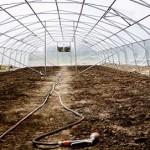 Знезараження ґрунту у теплиці без хімії