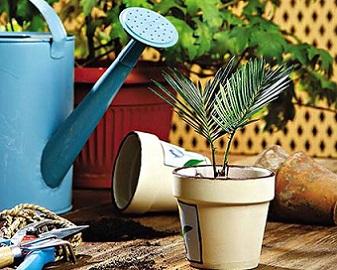 Все про кімнатні рослини, догляд, полив, розмноження тощо.