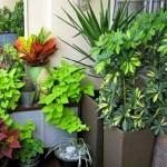 Переваги і недоліки кімнатних рослин.