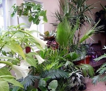 Догляд за кімнатними рослинами взимку.