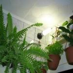 Рослини і квіти для ванної кімнати.