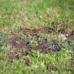 Ремонт трав'яного газону