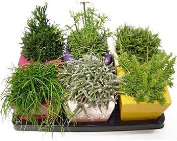 Декоративні кімнатні рослини - види, групи і застосування