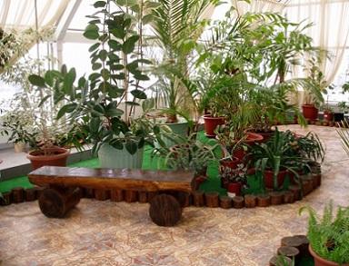 Рослини в оранжереї або у зимовому саду - освітлення, температура