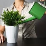 Як потрібно доглядати кімнатні квіти?