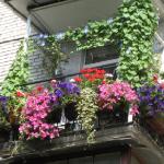 Основні шкідники балконних рослин і квітів.