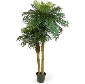 Які переваги у догляді за домашніми пальмами?