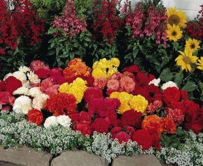 Які садові квіти називають багаторічними?