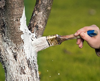 Якщо обмерзли гілки на фруктових деревах.