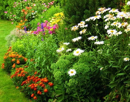 Багаторічні квіти для саду