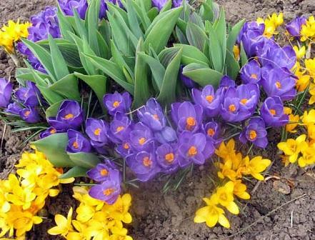 Перед посадкою квітів необхідно також
