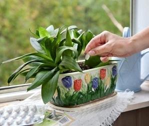 Яке має бути підживлення кімнатним рослинам.