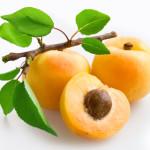 Технологія вирощування абрикосів з кісточок