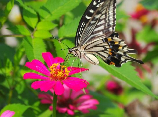 Квіти, що цвітуть влітку. Перелік та фото